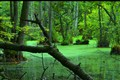 Lake in a Pristine Forrest