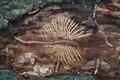 Fossilesque