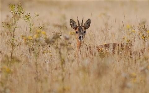 Xander Sales - camouflage ree
