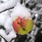 Apple_Snow_1_112706_1_1_1400px_reduced