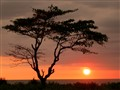 Sunset At Sawarna