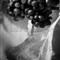 berriestestwtmk