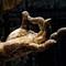 Buddha's Hand challenge IMG_2518