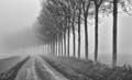 street_fog