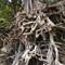 Kauai Hawaii Beach - Tree Roots - DSCN2925