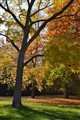 Autumn tree_0495