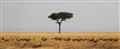 Serengeti Tree