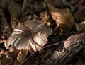 Shades of mushroom