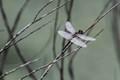 2019 05 04 Dragon Fly Pax River Sanctuary
