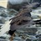 eaglego 043 - Copy