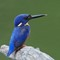 kingfisher22032019_2042v1