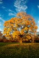 My beautiful tree