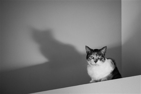 Contrast Cat Mark II