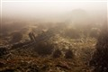 Scottish Highland fog