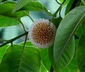 Sphere in a Tree