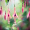 hanging_flowers_by_yinetyang-d4dvxcn