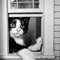 _cat in window