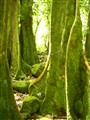 Moss on Hollow trees in Moorea