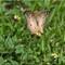 Butterflies_P6172063