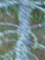 Ghostly Spruce