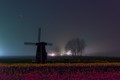 Soft Moonset Eclipse over Tulips