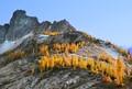 October larch, Granite Pass, North Cascades