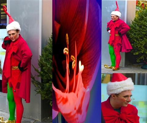 Elf on Broadway