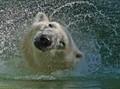 Polar Splash