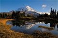 Rainier reflection in the meadow