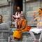 India-Nepal 2008-1711