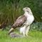 Hawk 024