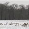 2013 snow WPO 002