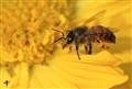 'Bee'sy!