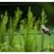 Birdy_D851011