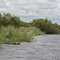 01-31-05 Okavango