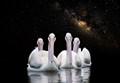 White pelicans Milky Way