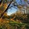 Herbst in den Donauauen_DSC07692_2