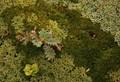 A carpet of plants