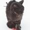 Black Kitty may have Plasma Cell Podadermatitis