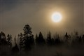 Morning Fog in Yellowstone