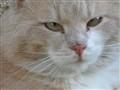 chat du Luberon