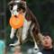 2011-06-19 12-43-32_01 dog frisbee 4