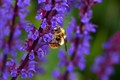 BEE WITH ANT