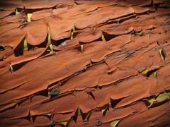 Pinacles in Mars