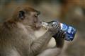 Monkey see monkey do!