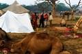 A camel camp