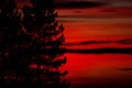 Deep red sunset with pine tree silhouettes.