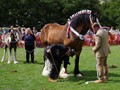 Rosedale Show 2018 - Big Horses