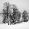 trær_ved_fjorden_v2
