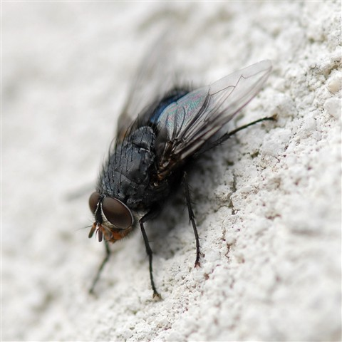 Another fly on the wall